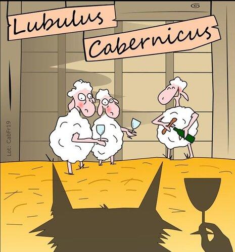 Lubulus Cabernicus