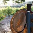 plp_product_/profile/dimitris-farm-and-vineyard