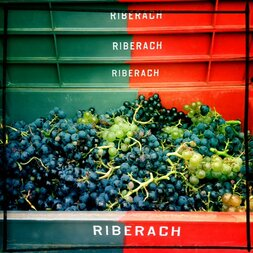 plp_product_/profile/riberach